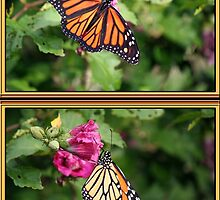Monarch Two-fer by WalnutHill