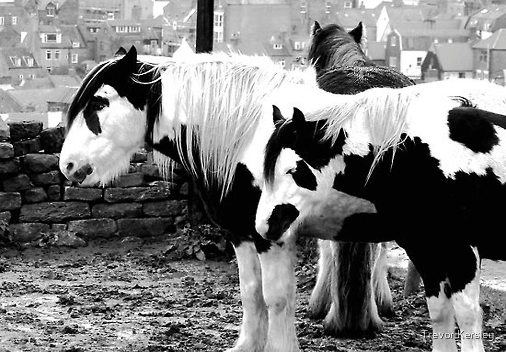 Black & White by Trevor Kersley