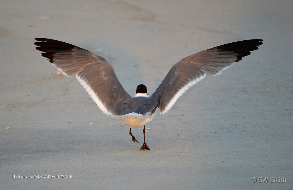 Seagull - New Beginning | Fire Island, New York  by © Sophie W. Smith