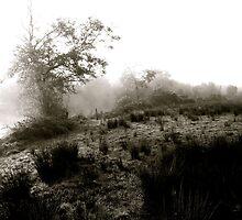 Misty Winter morning by the river Shannon by Julian Easten