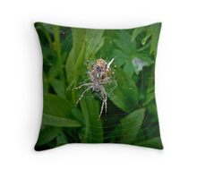 Hungry Garden Spider Throw Pillow