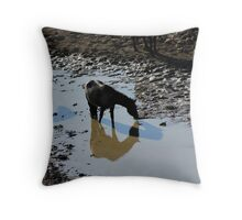 Shadows and Reflections Throw Pillow