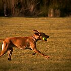 Fetch by Reese Ferrier