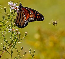 Monarch and Bee by Debbie  Roberts