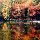 Autumn Reflections by Sandy Woolard