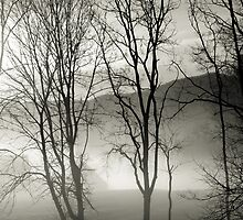 Foggy Trees by Kathy Jennings