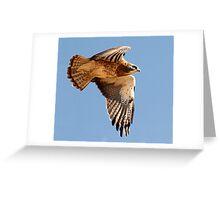1002101 Swainson's Hawk Greeting Card