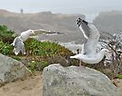 Seabirds at Half Moon Bay, California by Scott Johnson