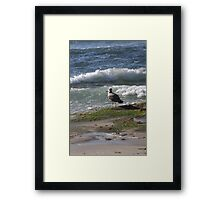 Seagull Watching the Surf Framed Print