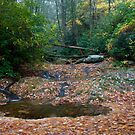 Dougars Creek by Forrest Tainio