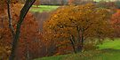 Adel Wood Autumn by WatscapePhoto