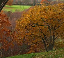 Adel Wood Autumn by WatscapePhoto