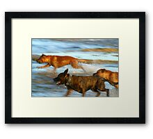 Dog games Framed Print