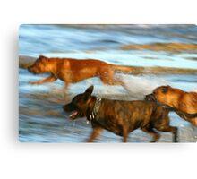 Dog games Canvas Print