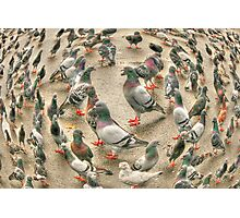 circle of pigeons Photographic Print