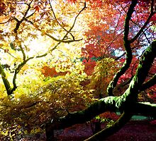 Autumn Colours ~ Westonbirt Arboretum by Josephine Pugh