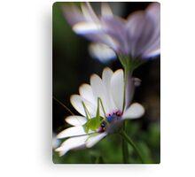 Grasshopper on White Daisy Canvas Print