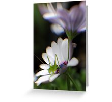 Grasshopper on White Daisy Greeting Card