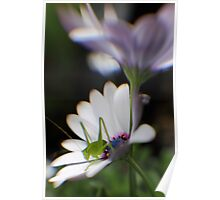 Grasshopper on White Daisy Poster