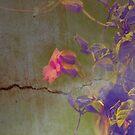 Broken Promises by Rozalia Toth