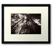 Redwood Giants Framed Print
