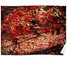 Autumn ~ Westonbirt Poster