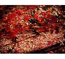 Autumn ~ Westonbirt Photographic Print