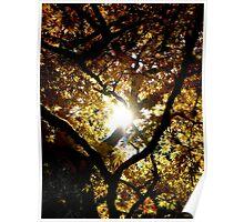Shine ~ Westonbirt Poster