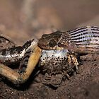 Featherland Snake and Prey by Paul Duckett