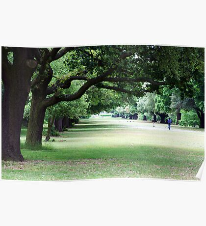 Tree lined walkway, Kew Gardens Poster