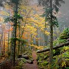 Foggy Forest III by Saka