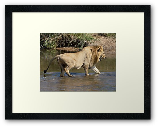 Majingilane Male Crossing River by Michael  Moss