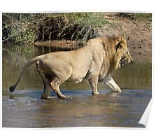 Majingilane Male Crossing River Poster