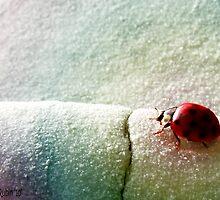 Precious Little Ladybug  by Marcia Rubin