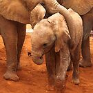 Affectionate Playmates: Baby Elephants by Carole-Anne