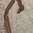 Mantis by Patrick Earhart