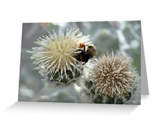 Bumble Bee harvesting pollen on flowers Greeting Card