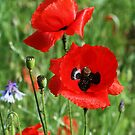 Poppies at Kew by Joanne Emery