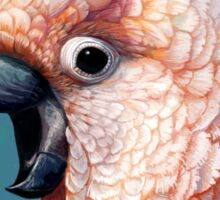 Moluccan Cockatoo realistic painting Sticker
