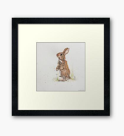 Swift Art, Rabbit Framed Print