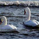 Heading Out by Sue Ratcliffe