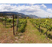 Kelowna vines Photographic Print