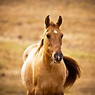 Young Mare by Sue Ratcliffe