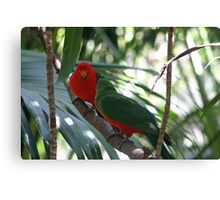 Male & Female King Parrot. Canvas Print