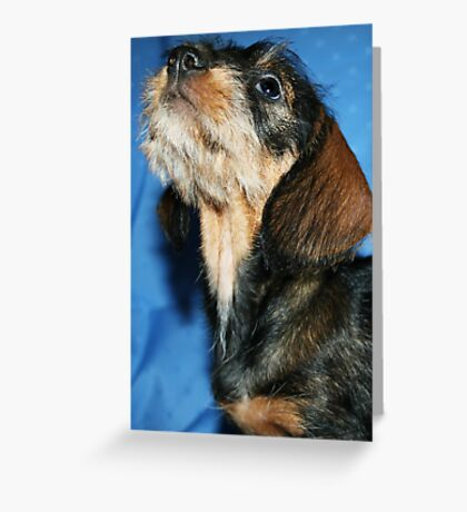 Miniature Wire Haired Dachshund Puppy  Greeting Card