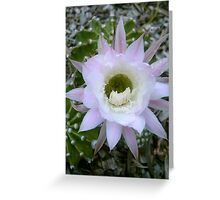Cactus flower close-up - Pingelly, Wheatbelt, Western Australia Greeting Card