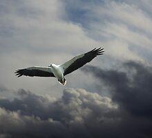 Ruler of the Skies by byronbackyard