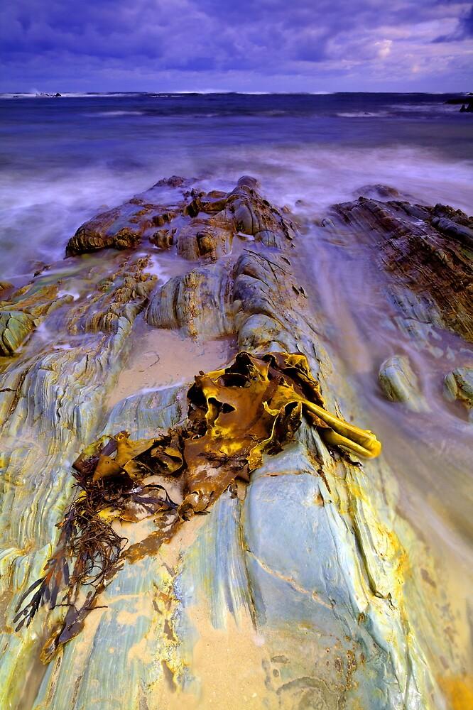 """""""Bull Kelp on Rocks"""" by Husky"""
