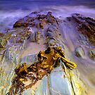 """Bull Kelp on Rocks"" by Husky"