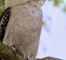 Kookaburra in Jacaranda Tree Sticker